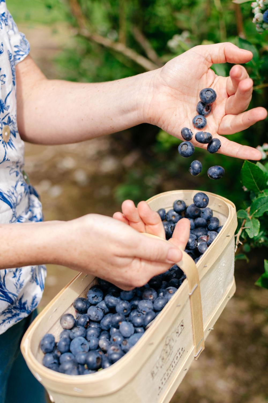 Celebrate Fresh BC Blueberries with GoBlueBC   Hello Vancity